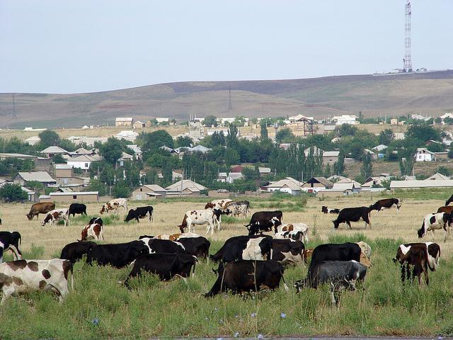 сельское хозяйство западного казахстана