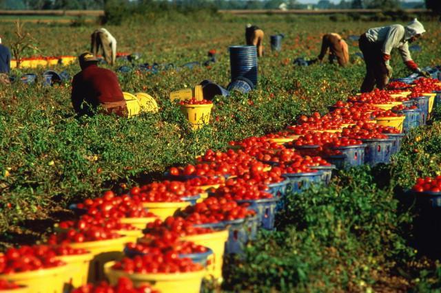 развитие сельского хозяйства в казахстане