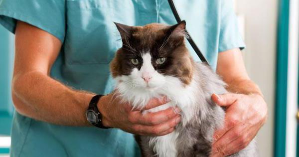 Кожный зуд у кошек ветеринарная клиника белый клык на коже сфинкса появились розовые пятна, что делать?