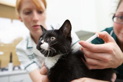 Если кот кашляет чем лечить в домашних условиях