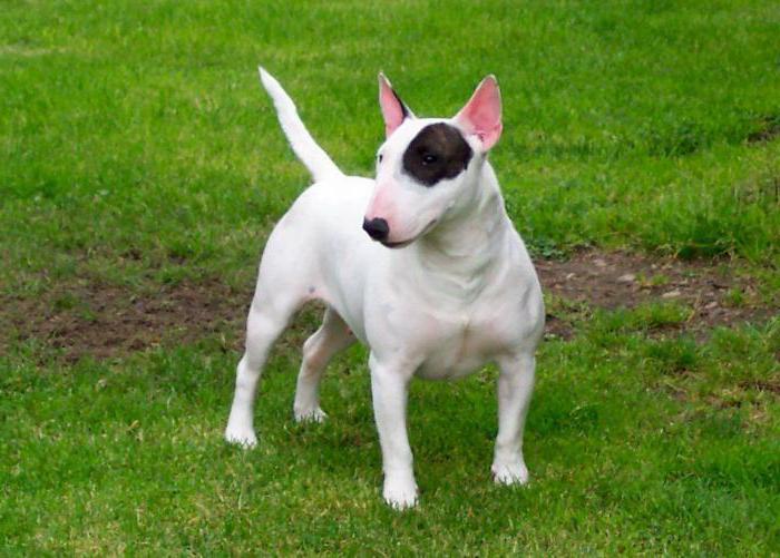 самые уродливые в мире собаки