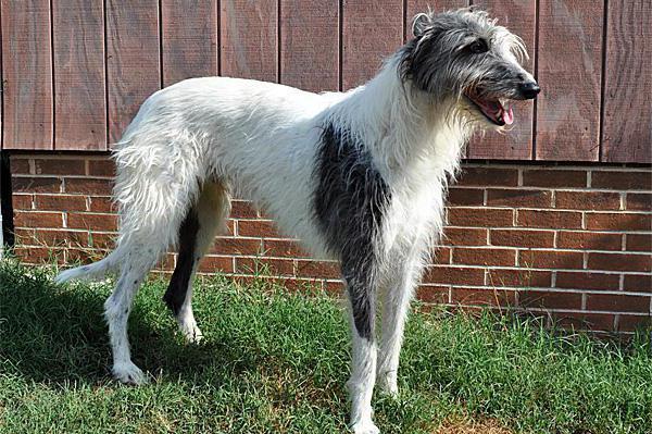 самая уродливая порода собак в мире