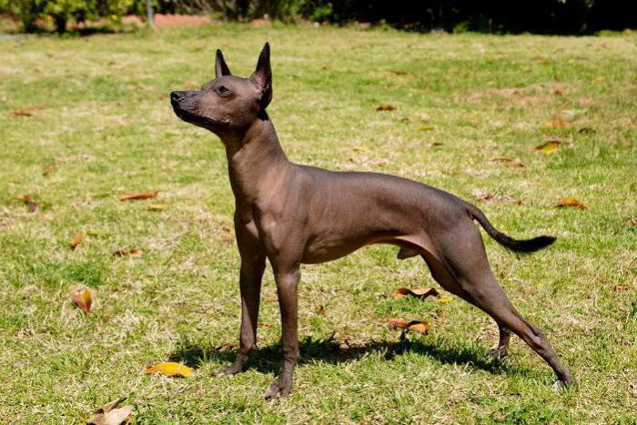 рейтинг самых страшных собак в мире