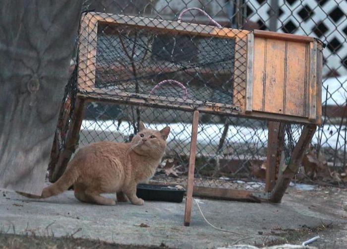как узнать как ловят котов