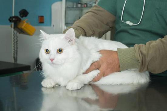 воспаление параанальных желез у кошек причины