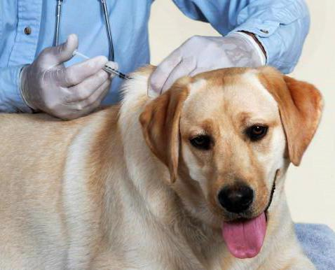 отодектин для собак дозировка