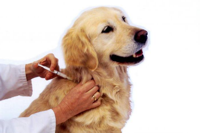 отодектин инструкция по применению для собак