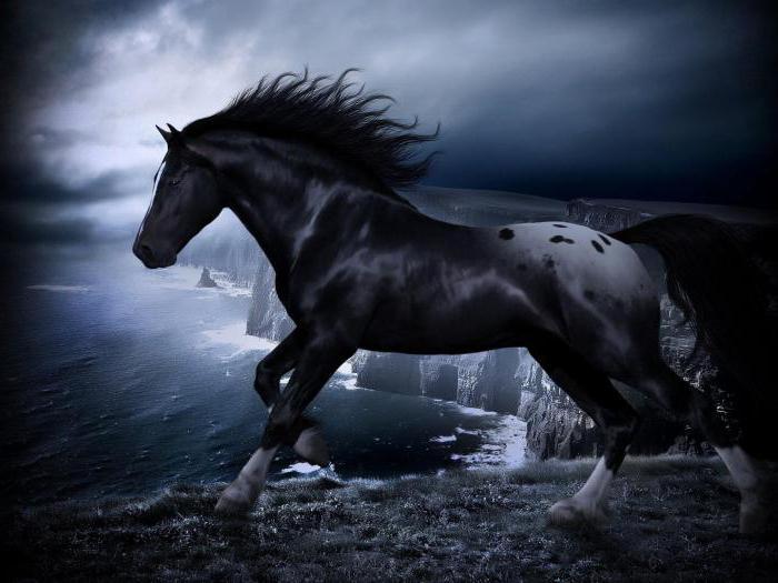 сонник черный конь