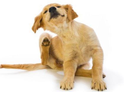 Royal Canin Gastro Intestinal - Veterinary Diet