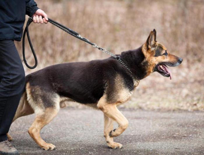 корм для собак холистик класса рейтинг