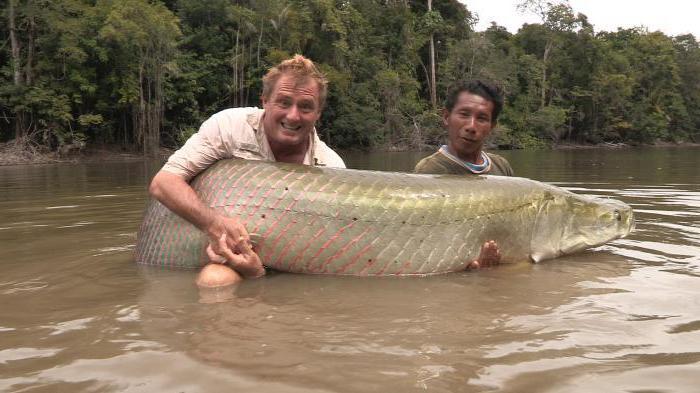 арапайма двоякодышащая рыба