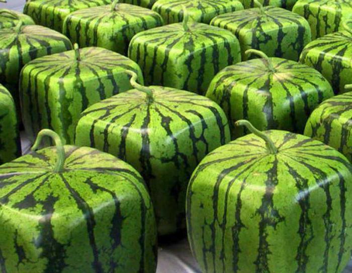 Фото необычных фруктов