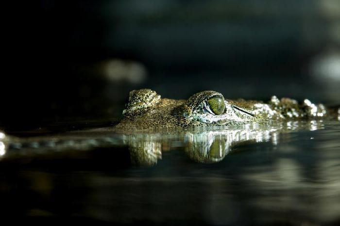 влияние и последствия употребления наркотика крокодил