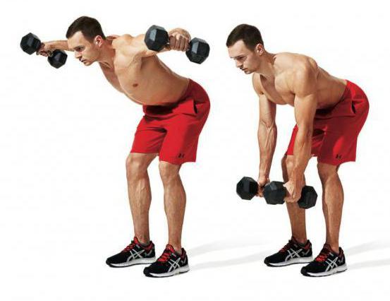 тренировка на верх тела