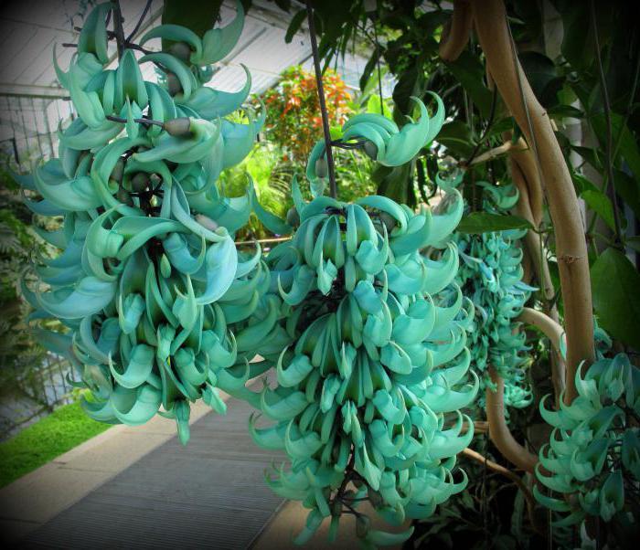 красивые декоративные растения