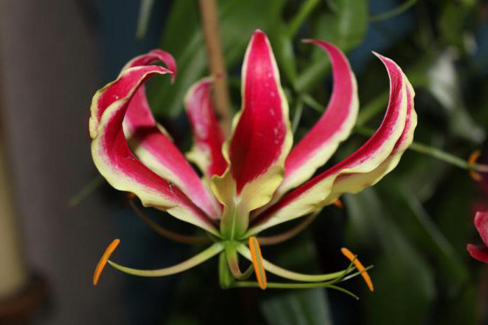 красивые цветы растения