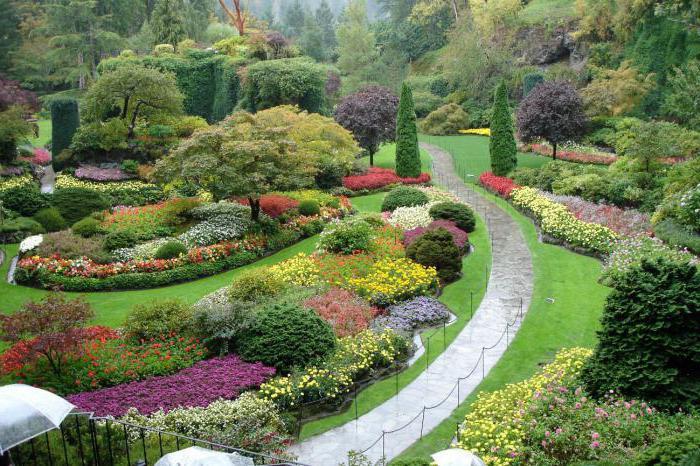 красивые растения