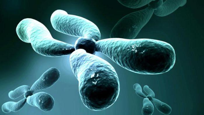 хромосомная теория моргана