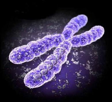 хромосомная теория наследственности т моргана