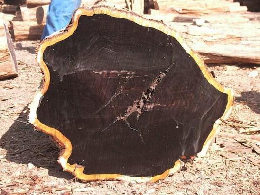 Древесина ценных пород дерева