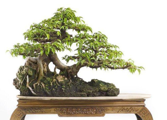Натуральная древесина ценных пород