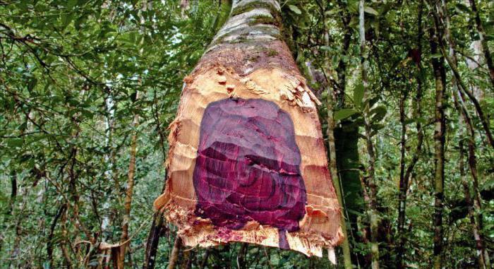 Массив древесины ценных пород