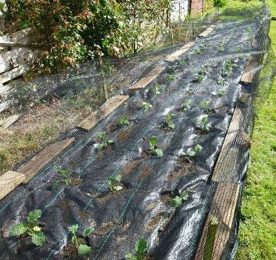 обработка участка от сорняков