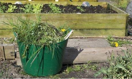как избавиться от сорняков на участке