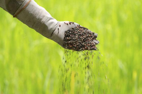 органические удобрения осенью