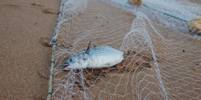 Как вязать рыболовную сеть