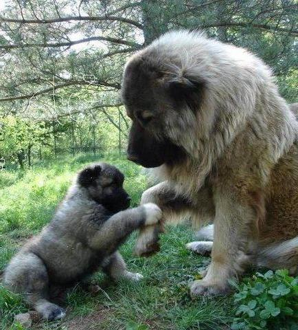 корм для крупных собак