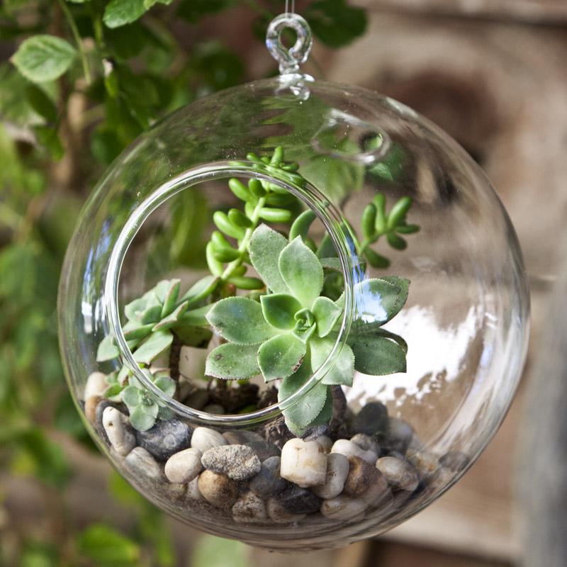 Мини-сад в стеклянной емкости