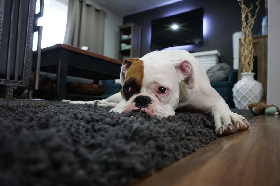 почему взрослая собака писает дома