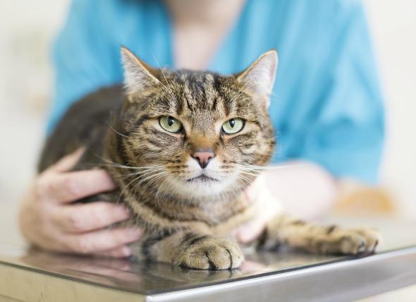 кот в ветклинике