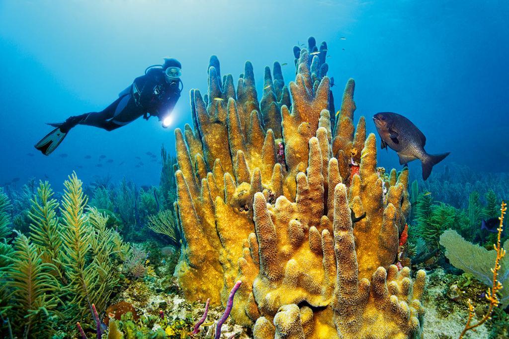 подводный мир у берегов Кубы