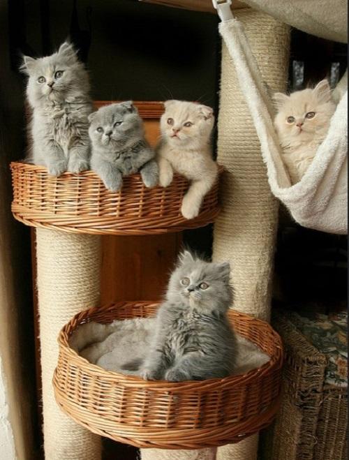 Места обитания кошек в доме