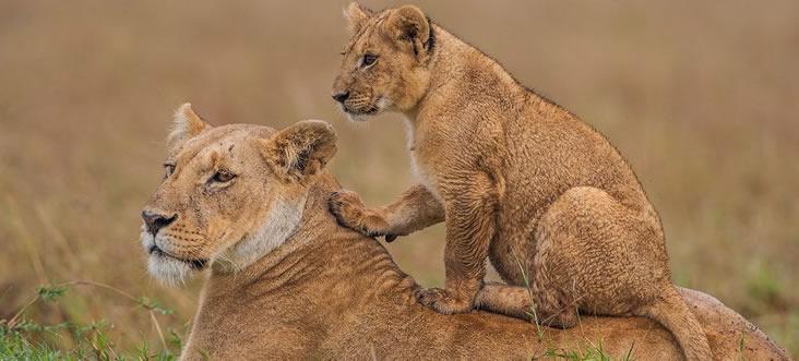 национальный парк озеро накуру в кении