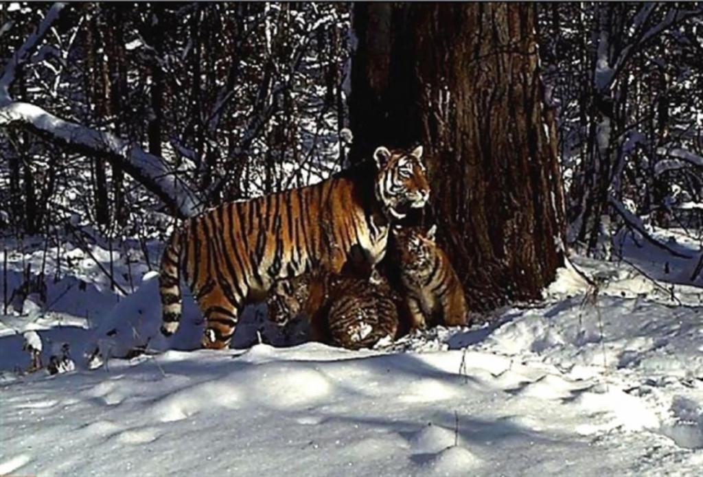 Семейство дикого зверя