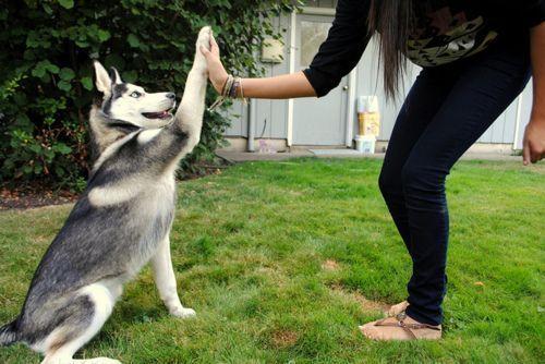 Дрессировка собаки