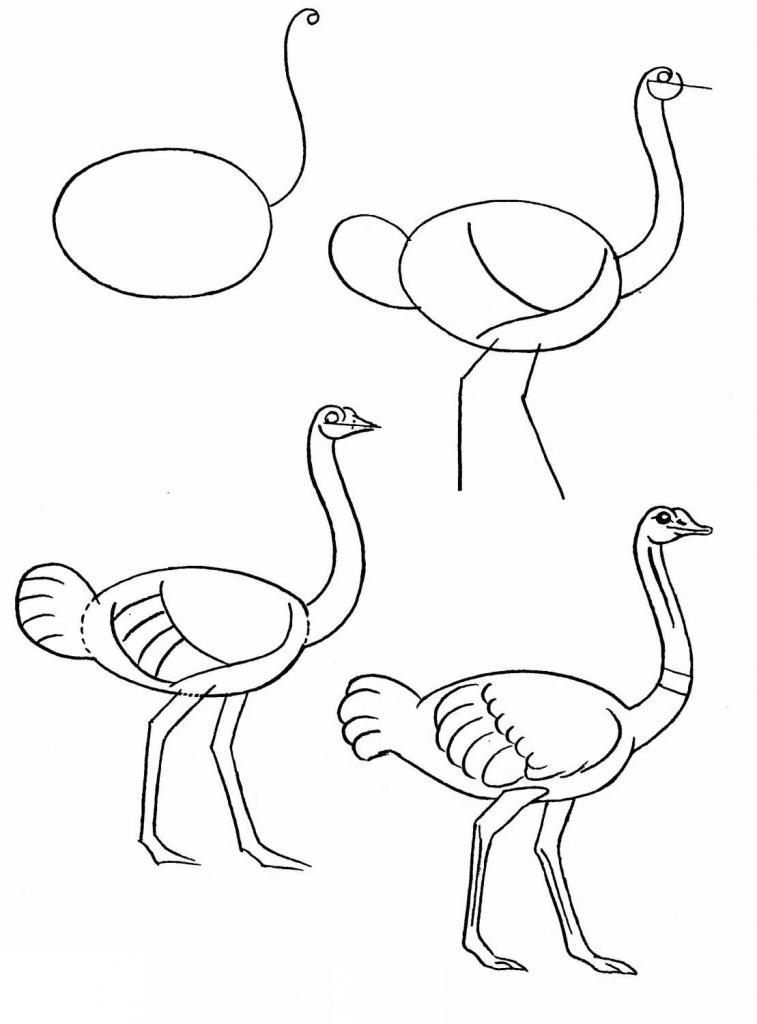 Рисуем страуса
