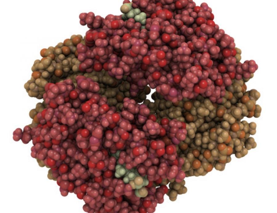 билирубин - белок