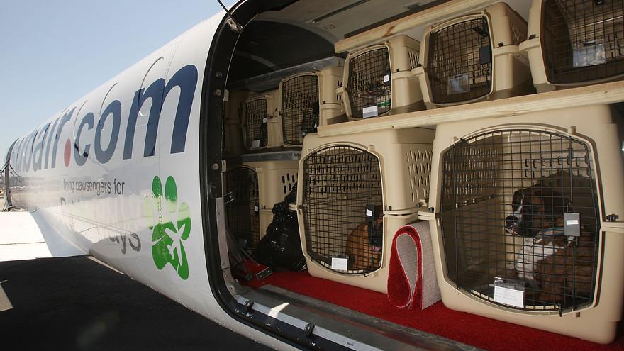 животные в багажном отсеке самолета