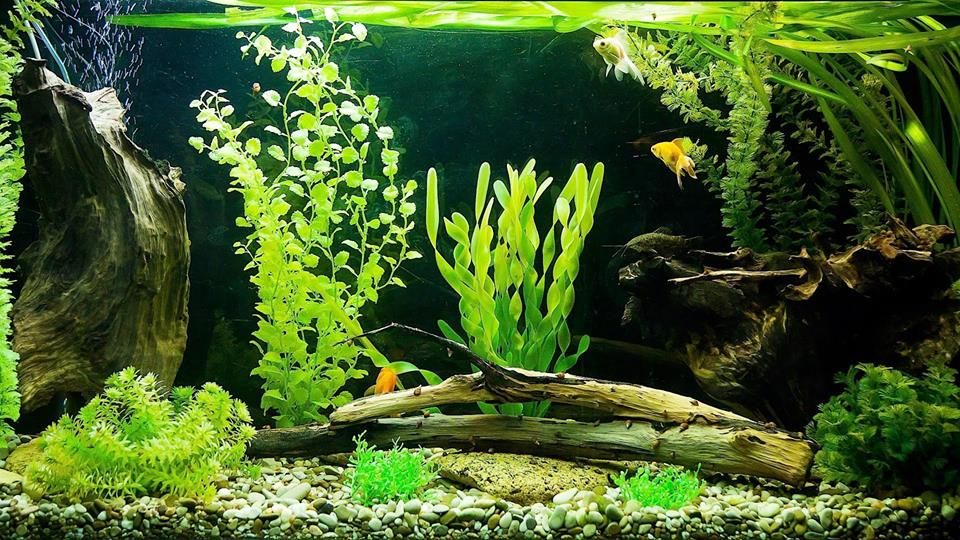 обратный осмос для аквариума
