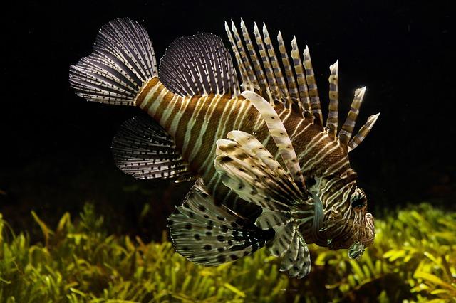 какой осмос для аквариума