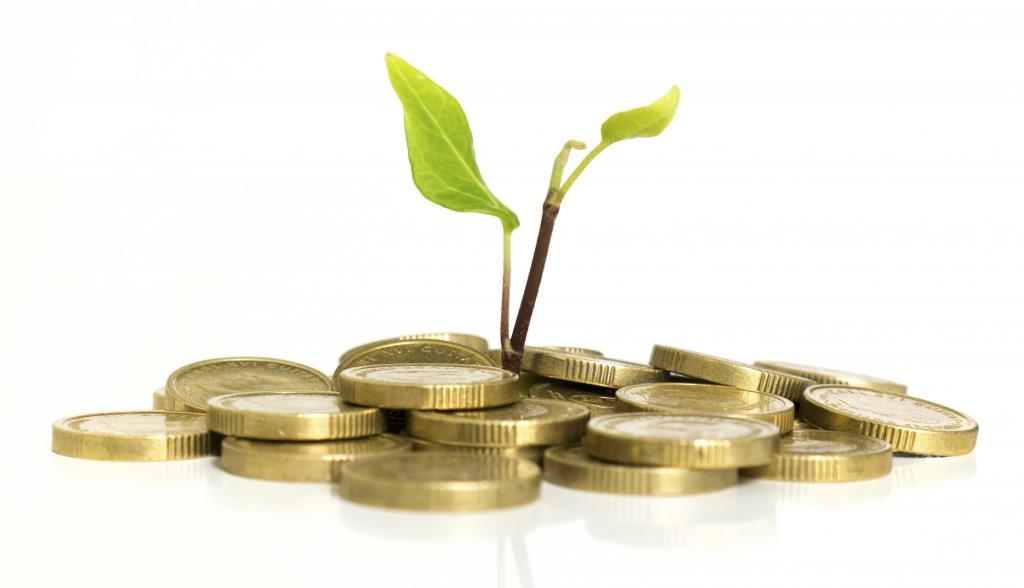 росток тянется из монет
