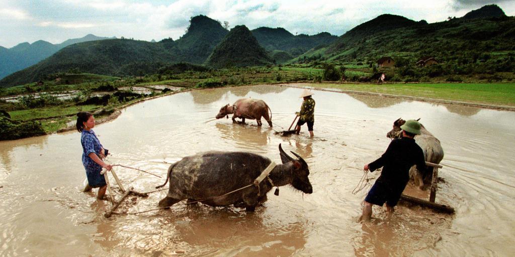 Работа вьетнамцев