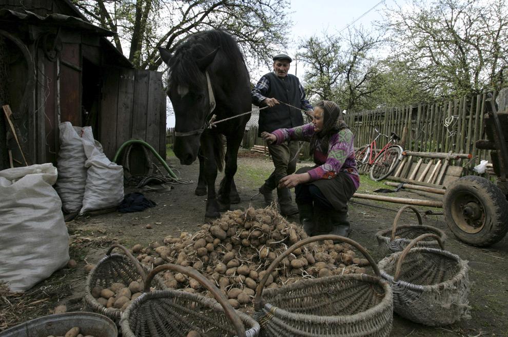 трудолюбие белорусов