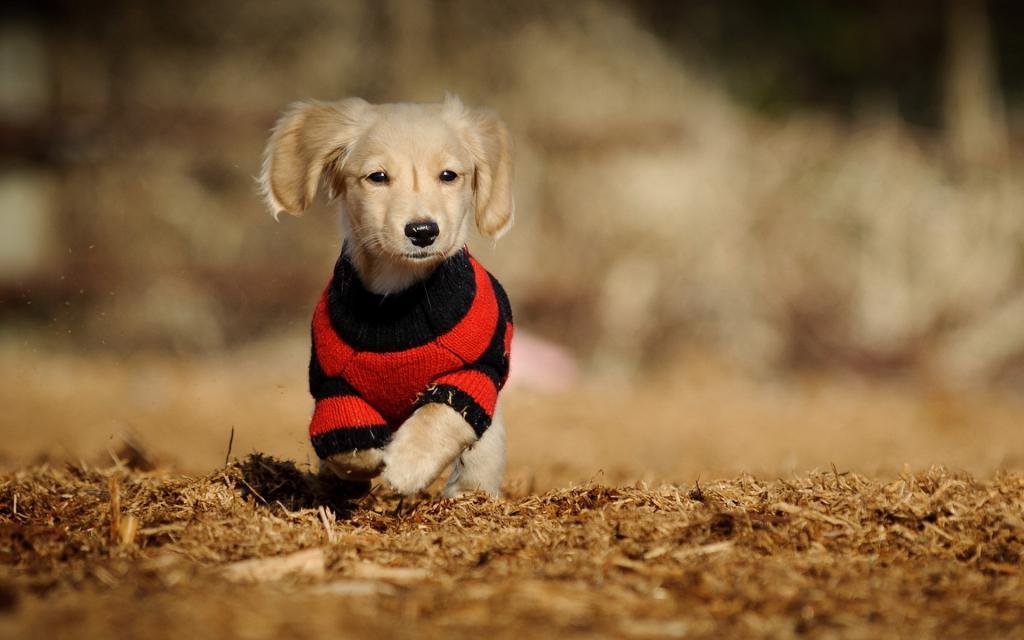 вязаная одежда для собаки своми руками