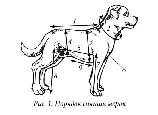мерки собаки для одежды