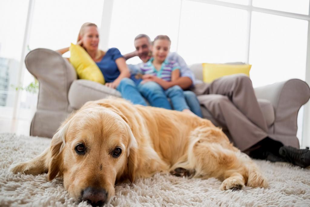 метеоризм у собаки лечение